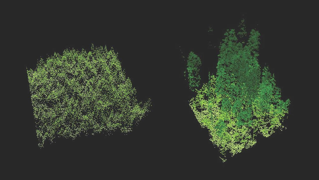 Lidar imaging comparing old-growth forest (right) to a new plantation of trees (left).